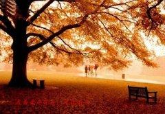 我最爱的深秋,请你别走